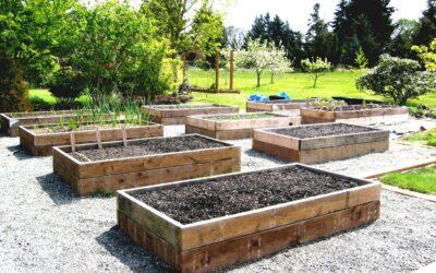 Tips on Adding an Edible Garden in Your Backyard